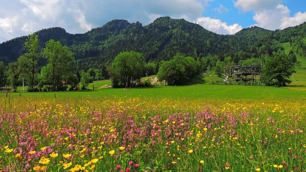Brauneck mit Frühlingswiese und Hochseilgarten