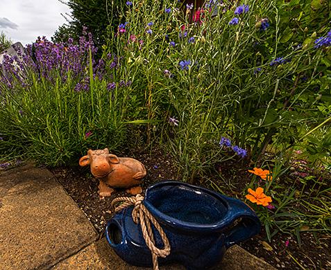 Lavendel und Kornblumen